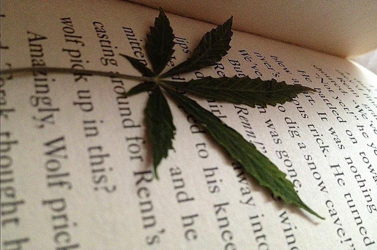 Cannabis Glossary