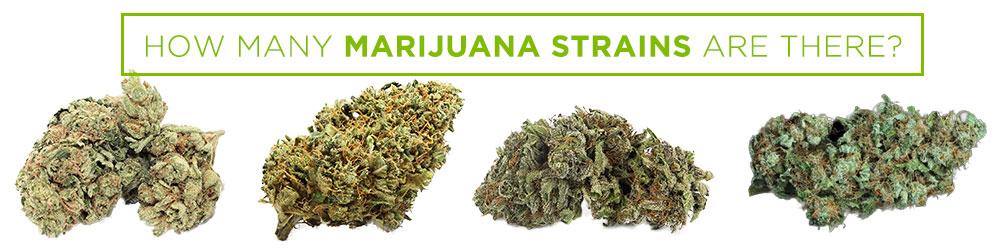 how many marijuana strains are there