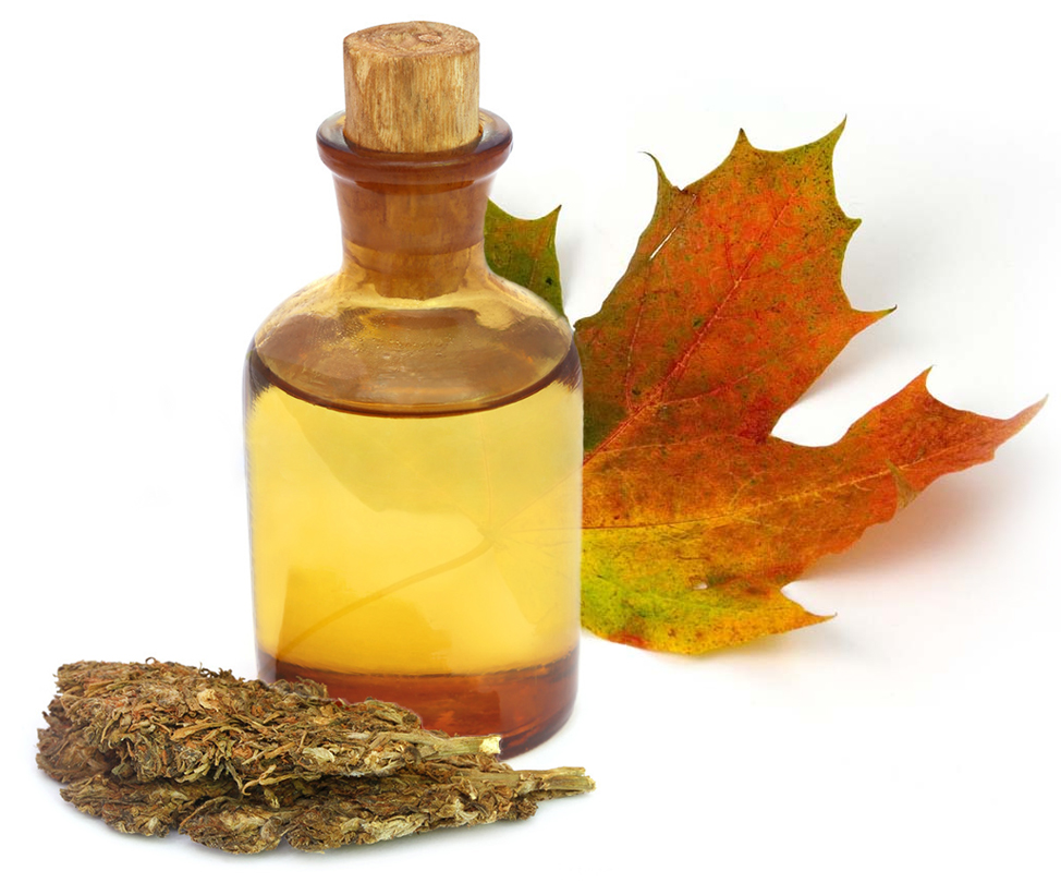 Weed Oil and Maple Leaf