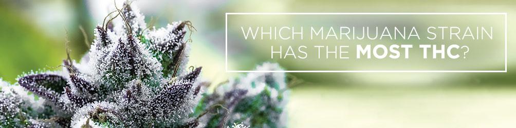 Which Marijuana Strain Has The Most THC