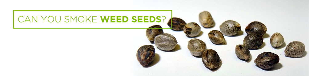 can you smoke weed seeds