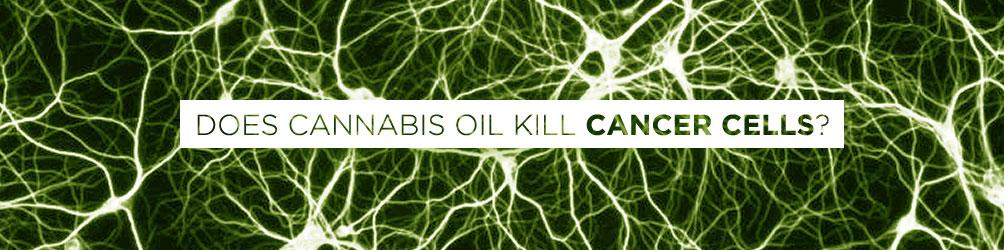 does cannabis oil kill cancer cells